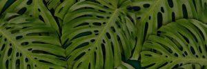 Large leaf background.