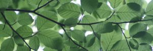 Leaf background.